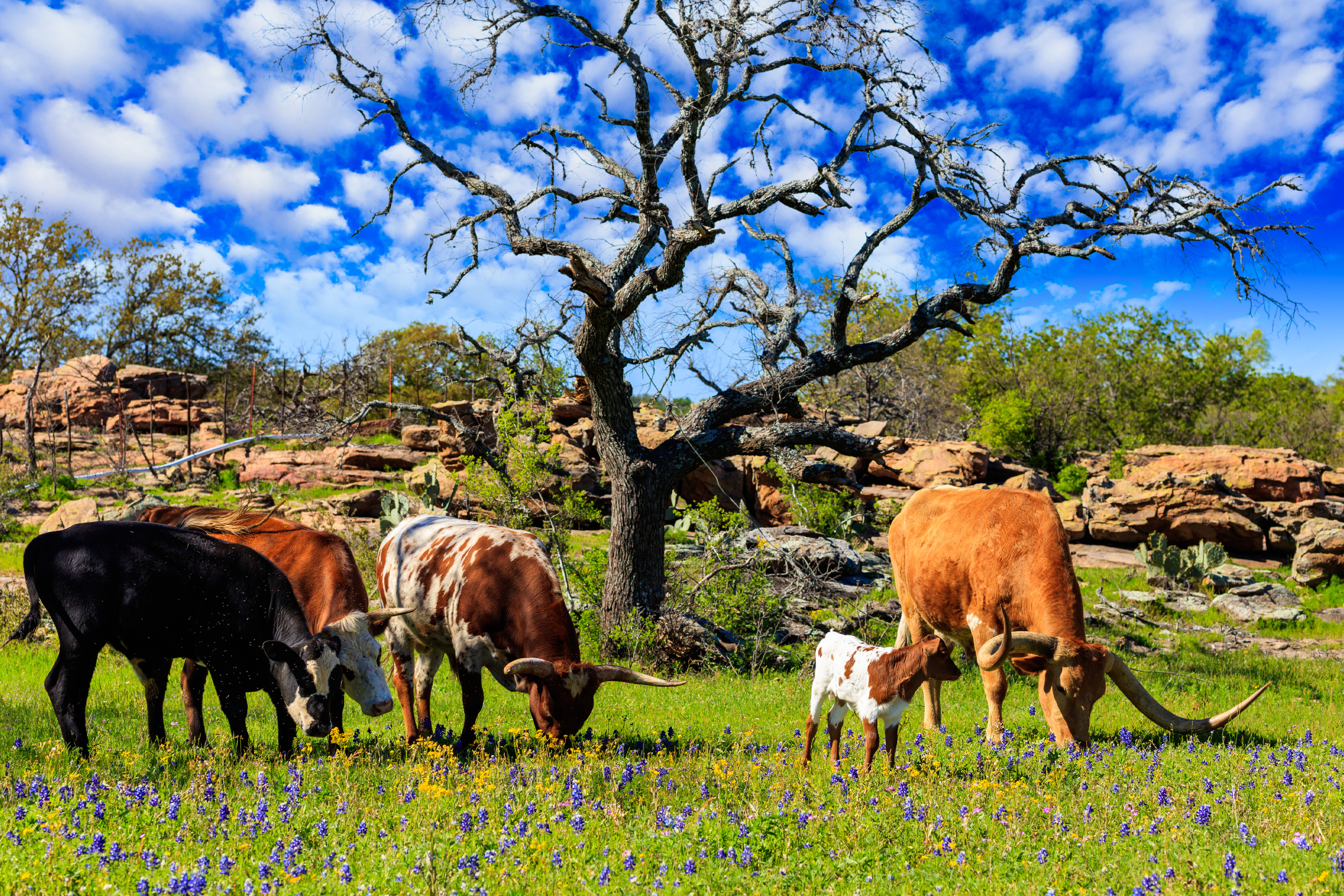 Texas Longhorn Farm and Ranch Safety Tips